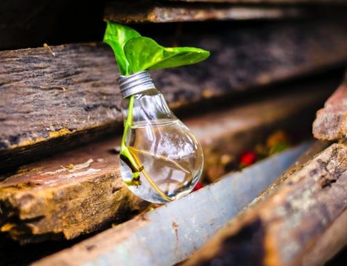 MKB-bedrijven laten miljoenen aan groene subsidie liggen